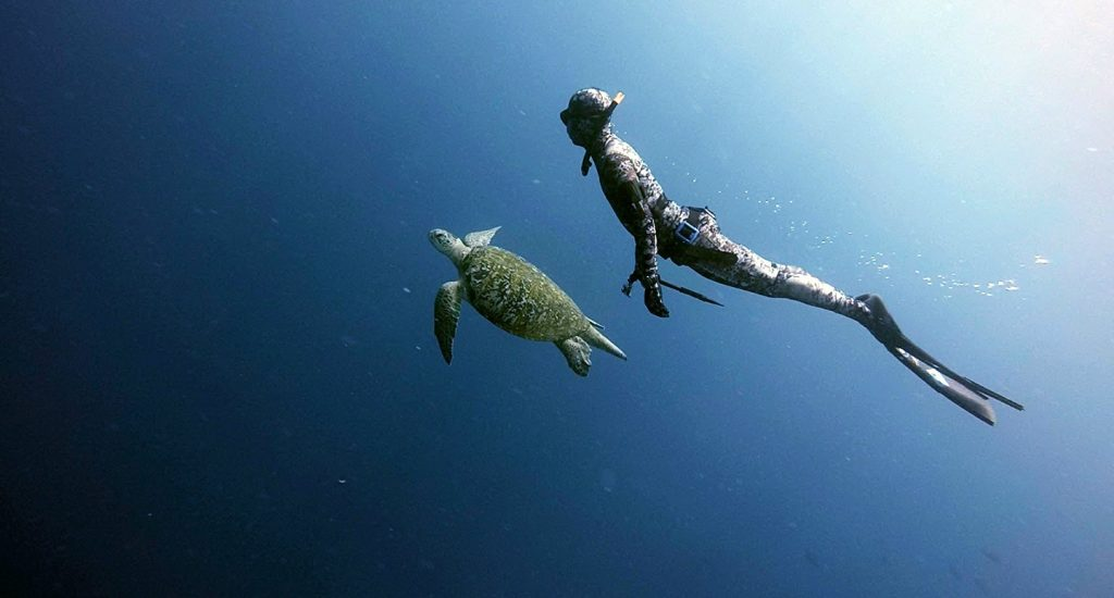 free-diving-with-turtle-large