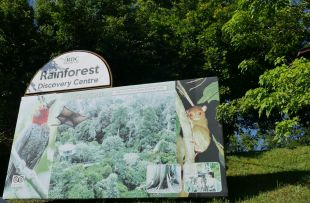 rainforest-discovery-3