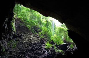 garden-of-eden-mulu